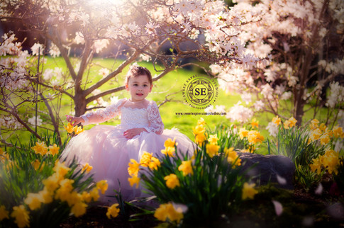 Spring blossoms photography