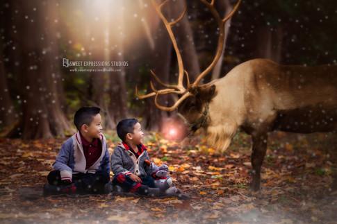 Christmas-Reindeer.jpg