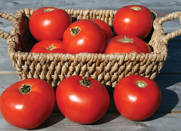 Tomato - Mountain Fresh Plus