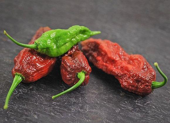Pepper (hot) - Chocolate Bhut Joloka