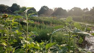 Aromatic Acres urban farm views