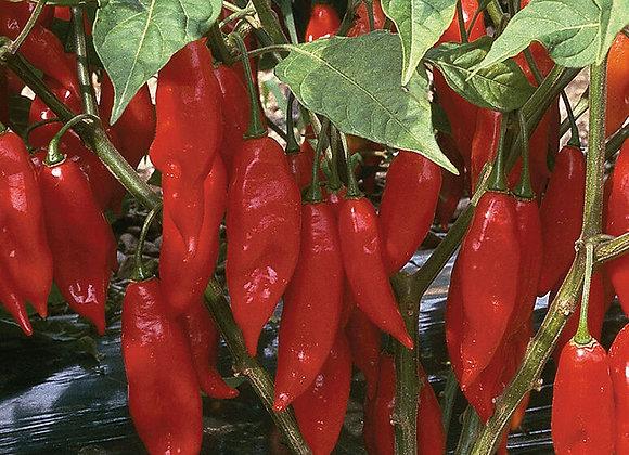 Pepper (hot) - Paper Lantern