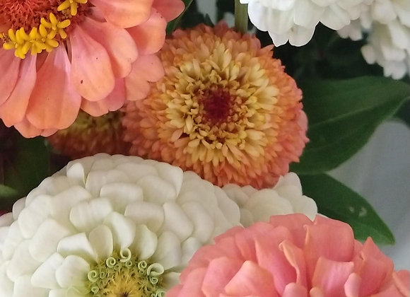 Zinnia - Pastel Mix 4-pack