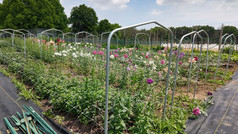 Spring blooms at Aromatic Acres urban farm