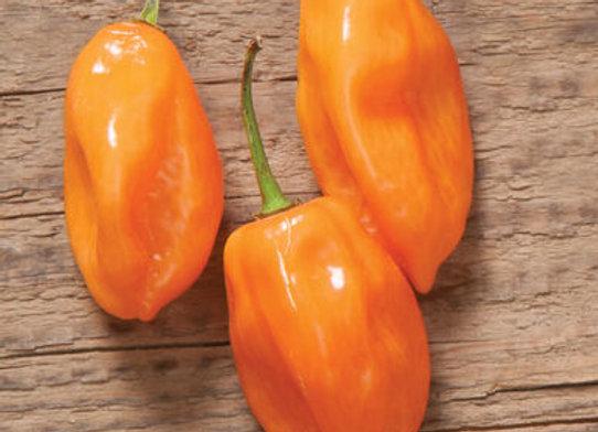 Pepper (hot) - Habanero