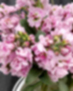 Aromatic Acres Wholesale Flowers