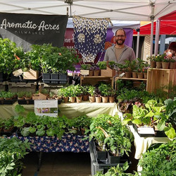 Aromatic Acres 2019 plant sale at the Tosa Farmers Market.