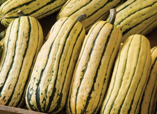 Squash (winter) - Delicata