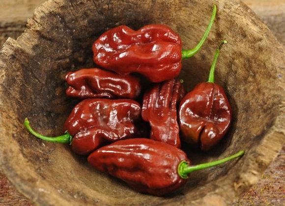 Pepper (hot) - Chocolate Habanero