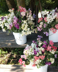 Aromatic Acres Bulk Botanicals - Wedding & Event Florals