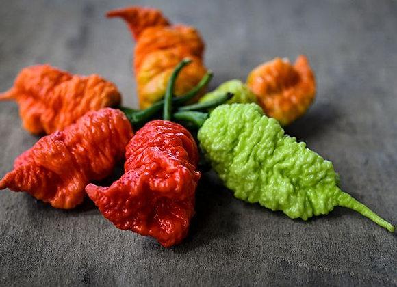 Pepper (hot) - Death Spiral