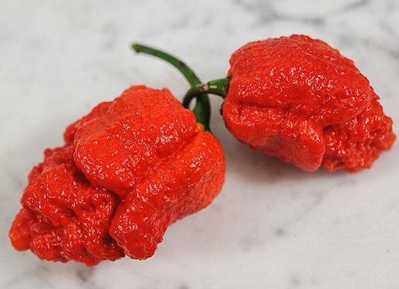 Pepper (hot) - Apocalypse Scorpion