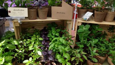 Aromatic Acres herb plants