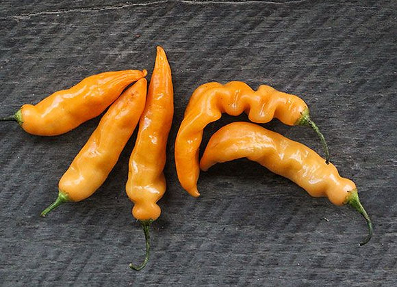 Pepper (hot) - Sugar Rush Peach