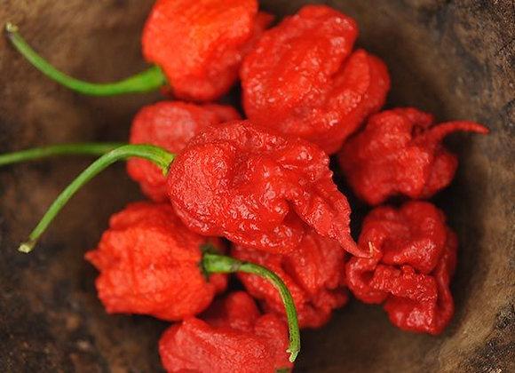 Pepper (hot) - Carolina Reaper