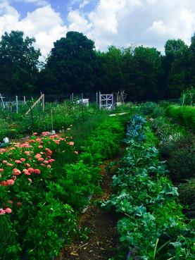 Aromatic Acres urban farm