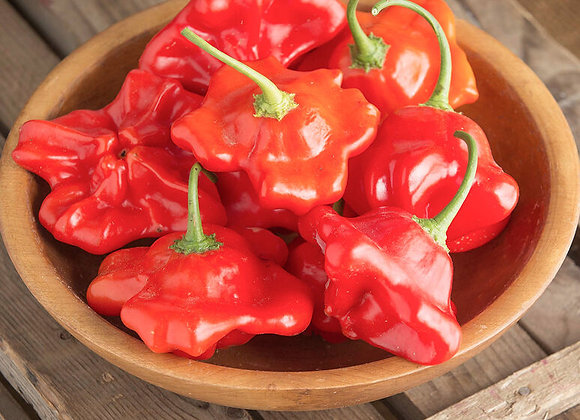 Pepper (hot) - Mad Hatter