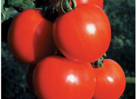 Tomato -New Girl