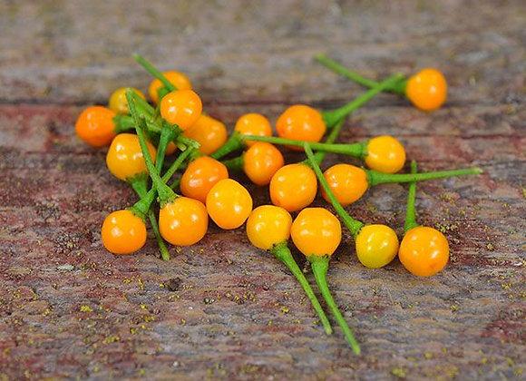 Pepper (hot) - Aji Charapita