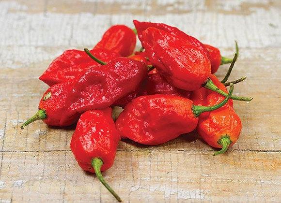 Pepper (hot) - Bhut Jolokia (ghost pepper)