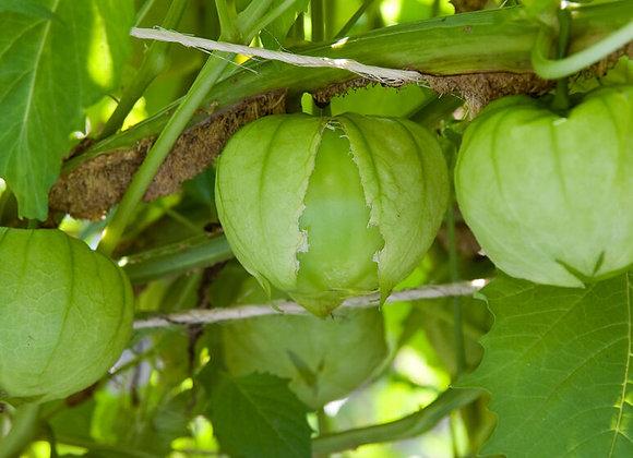Toma Verde Tomatillo