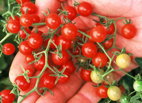 Tomato - Currant