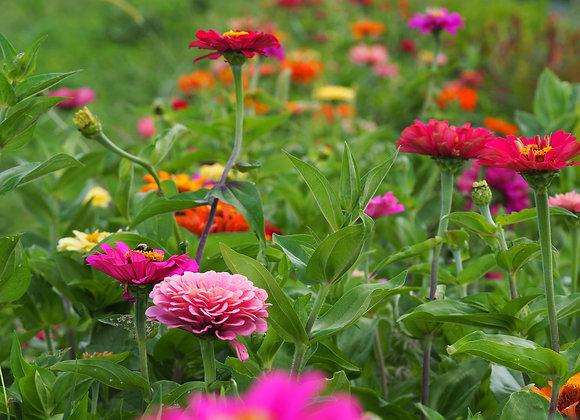 Cutting Garden - Juicy Summer Annuals