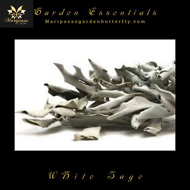 White Sage (4 ounces)