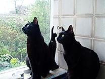 Coco and Gigi, studio cats at Manchester Piano Tutor