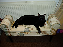 Coco on her chaise longue.jpg