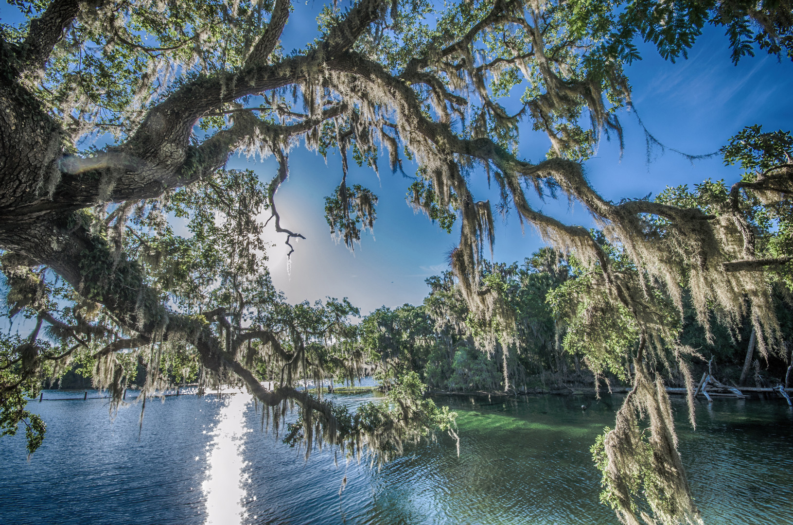 Blue Springs near Orlando Florida.jpg