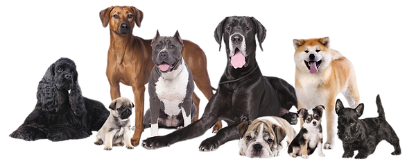 group-of-dogs.png