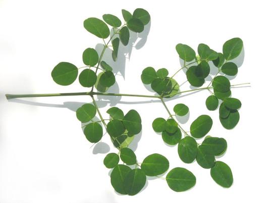 "Wood Vinegar & Moringa Seeds – The ""Superfood"" Combo for Plants"