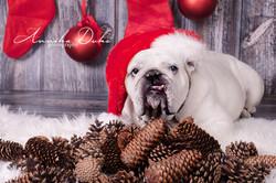 Sören_Weihnachten_2015-60-Edit_AD_klein