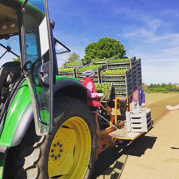 Betts Tractor.jpg