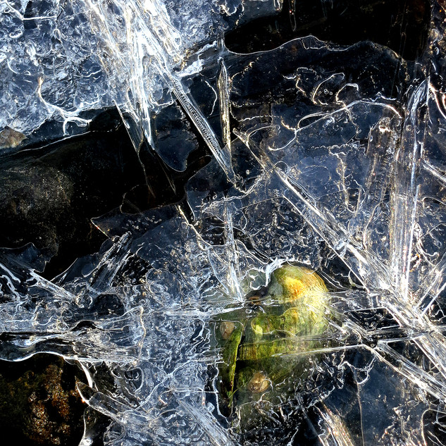 Seed In Ice
