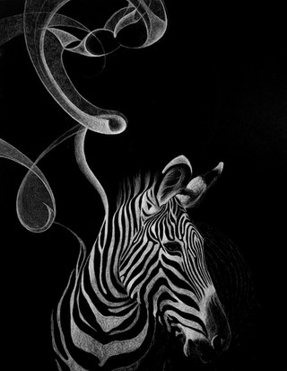 Gravy's Zebra