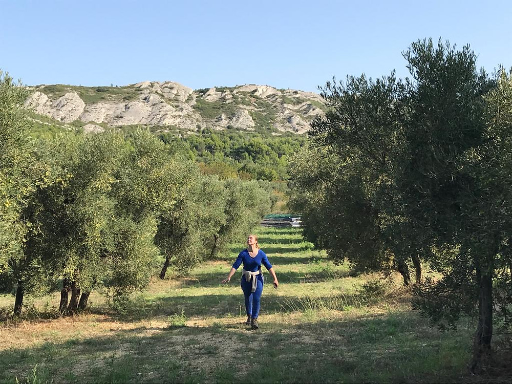 A walk in the olive grove