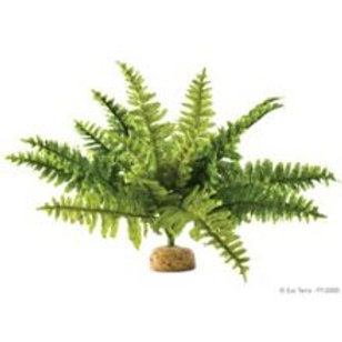 Exo Terra Boston Fern Rainforest Plant