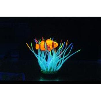 Aquarium Lumo Anemone & Fish
