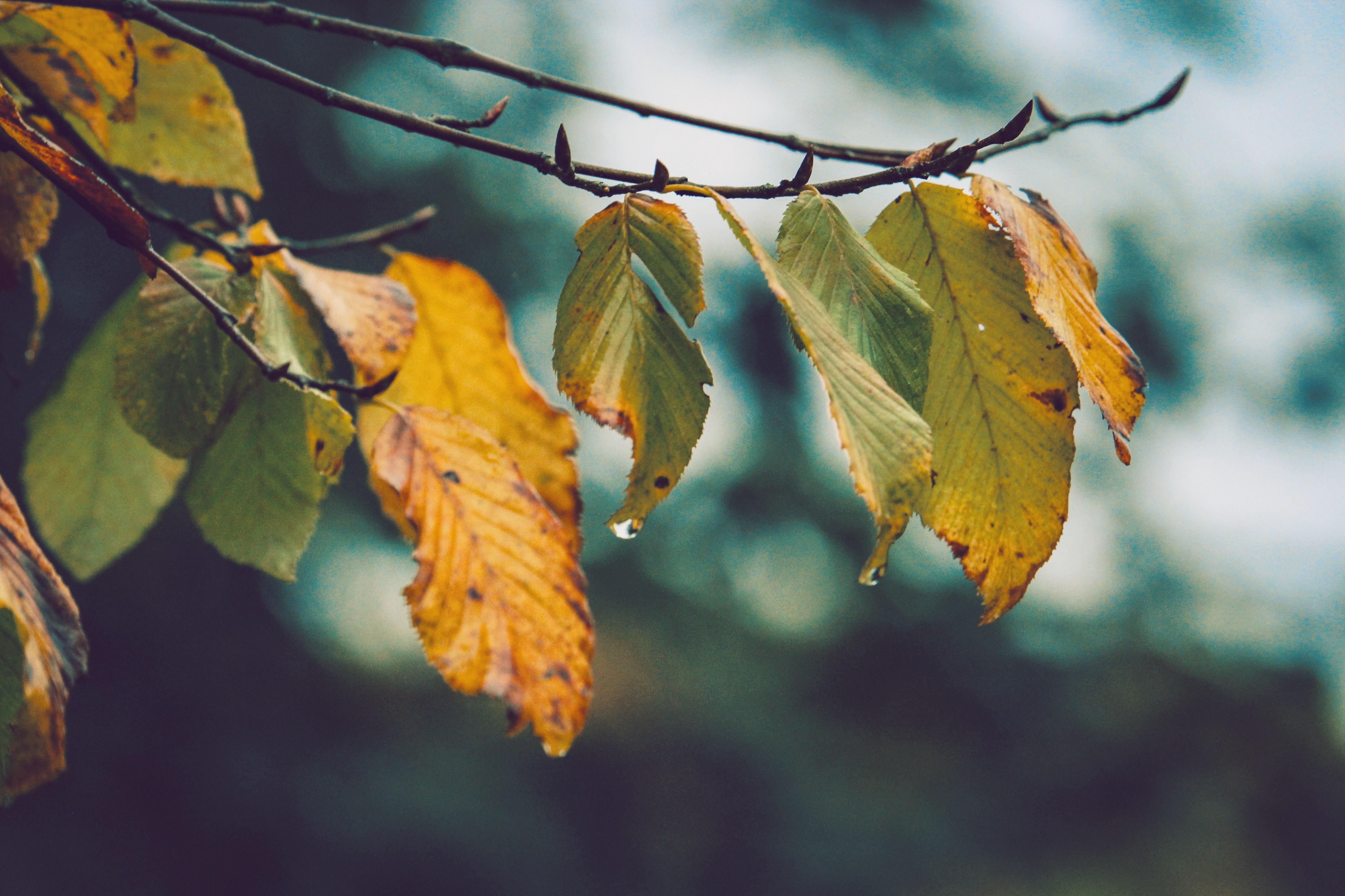 after-the-rain-autumn-autumn-leaves-606455