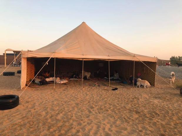 Camping at BarkPark