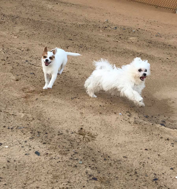 Having fun in our small dog area