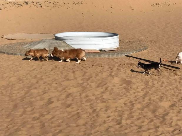 Small dogs - Big fun