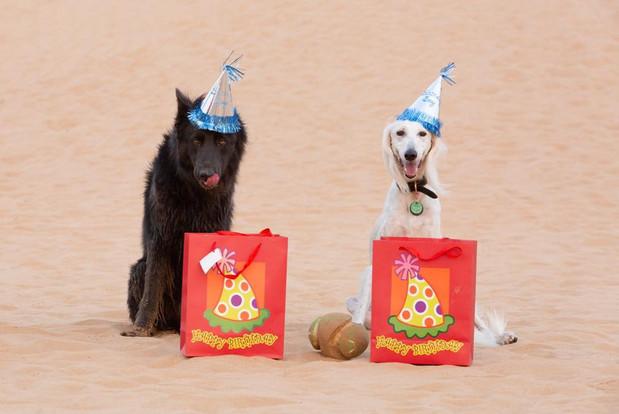 Birthday Barky for Smoke & Sarhan