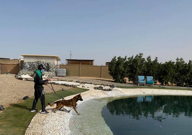 Dubai Police K9 Unit training in action