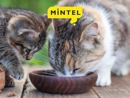The pet food market: the present and near future