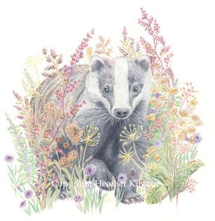 animals-badger.jpg