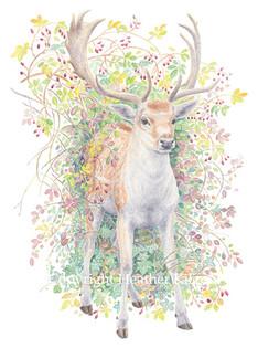animals-deer2.jpg