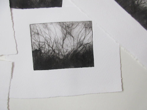 Winter Trees, dry point etching, monotype